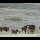 09. Busz Telus - Krowy